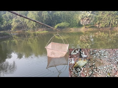 Fishing | Latest Fish Trap Using Mosquito Net & Bamboo | Amazing Way Of Catching Country Fish