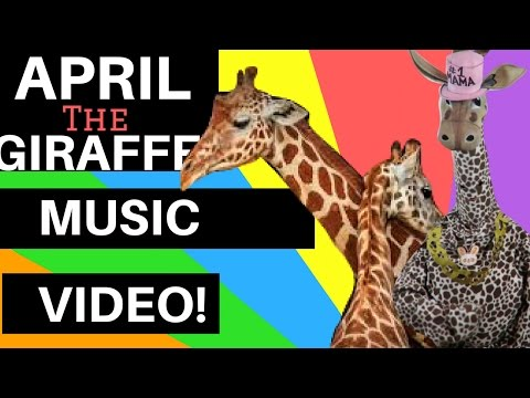 Thumbnail: ★ APRIL THE GIRAFFE BIRTH: Music Video Rap! (Song About April, Baby & Oliver APRIL OG)