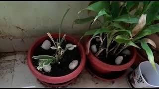 Beautiful Pots & Indoor Plantation