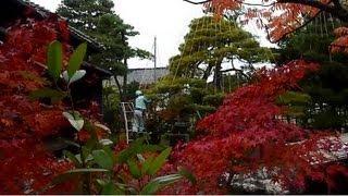 薬種商の館・金岡邸で雪つり作業はじまる 富山
