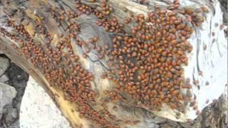 Ladybugs.mov