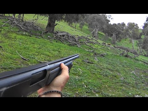 Mountain Boar Pig Hunt 2nd installment.