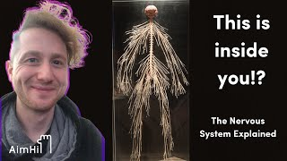 How does the Nervous System work? // HiSchool Biology with Josh