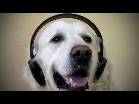 Cats and dogs love music – Funny and cute animals compilation