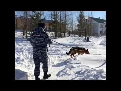 Ограбление Сбербанка в Белоярском районе