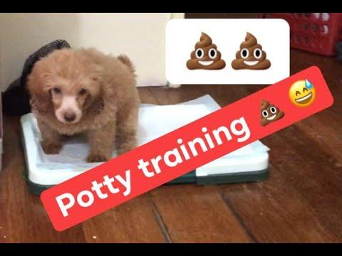 Potty training, paano ituro sa Aso ang potty training