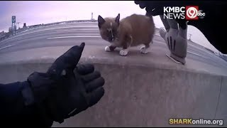 Cop Rescues Kitten from Highway