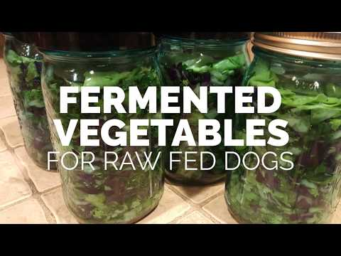 Fermented Vegetables for Raw Fed Dogs