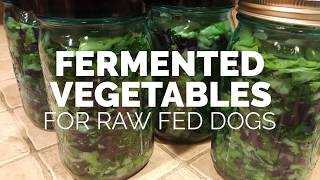 Fermenting vegetables and seeds for dogs provides a natural source of probiotics, additional nutrients, fiber, anti-oxidants. this is amazing your do...