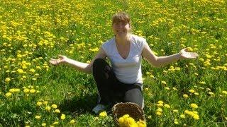 Одуванчик лекарственный - Лекарственные травы