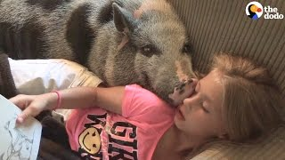 Shy Pig Loves His New Family So Much | The Dodo