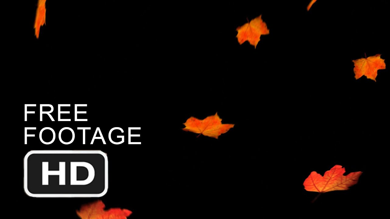 High Definition Fall Wallpapers Free Stock Video Footage Background Falling Autumn