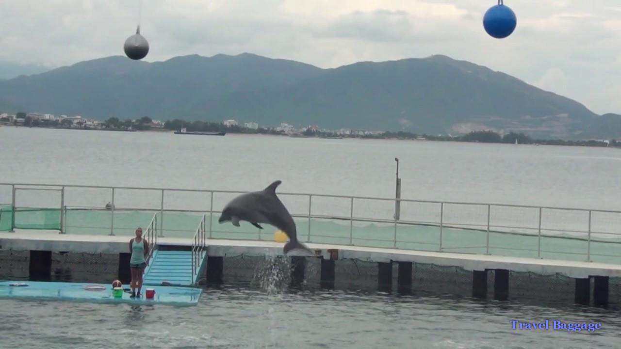 Дельфин и Русалка, и с ними ушастый тюлень - YouTube