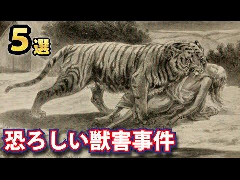 閲覧注意!恐ろしすぎる獣害事件!人間を襲い食べた怖すぎる事件5選!ライオン、熊など野生の脅威
