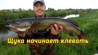 Рыбалка на Реке Бобрик троллингом Река Припять
