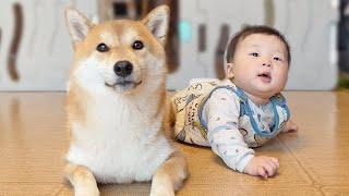 아기와 강아지가 친구가 되는 과정