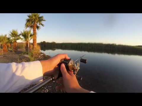 Bank Fishing At The Colorado River