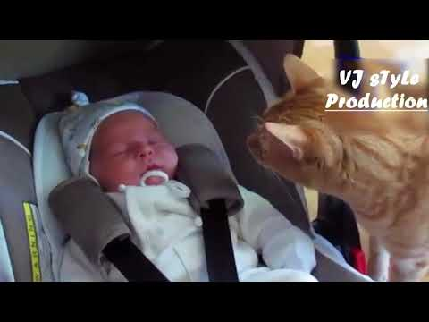 Funny cat and dog compilation Cats and dogs meeting babies for the first time   Cute animal compilat