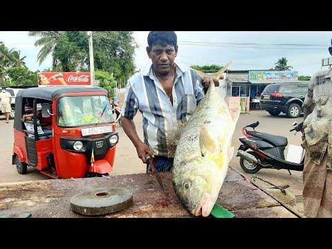 GIANT TREVALLY FISH CUTTING | කබරා