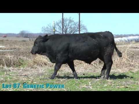 Lot 87  Genetic Power