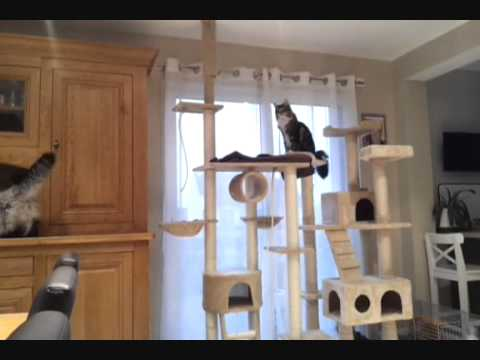 Gobert et son arbre a chat youtube - Arbre a chat design pas cher ...