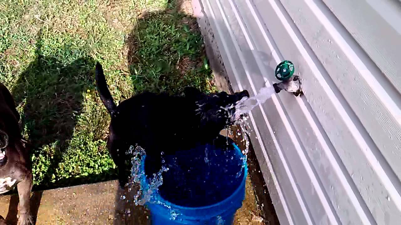 My dog freaking out on the water faucet - YouTube