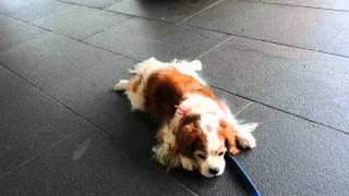 真夏の暑い日、 静岡県立美術館入口の冷えたコンクリートの床。 ロビン...