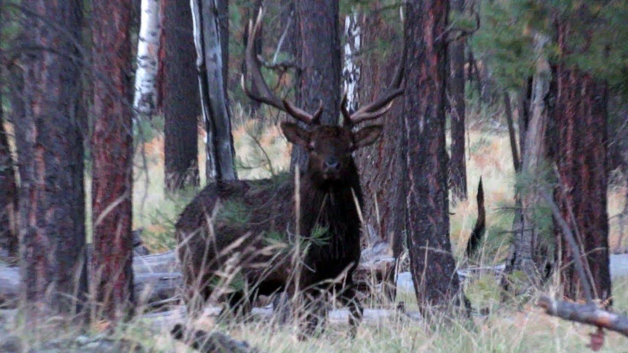 Elk Hunting WMAT | Zone 1 Archery Elk - YouTube