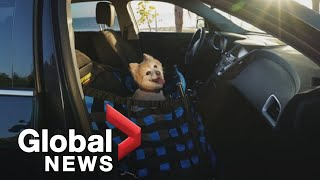 Protecting pets on summer road trips