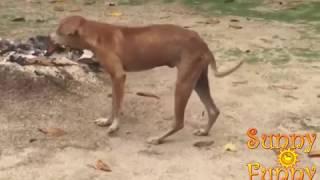 Танцующие собаки (Подборка)