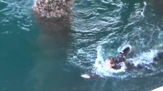 Rescue at the Santa Monica Pier