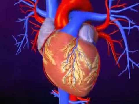 Download Insuffisance cardiaque   Sympt mes, Causes et Traitements