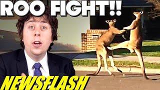Wild Kangaroo Fight in Suburban Streets!! - NEWSFLASH