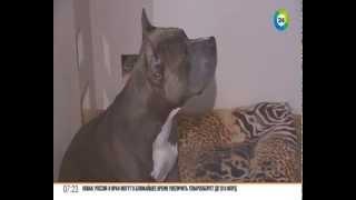 Как правильно чистить уши собакам: советы от специалиста по поведению собак.