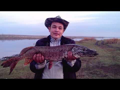 Трофейная щука  Рыбалка в Кумертау