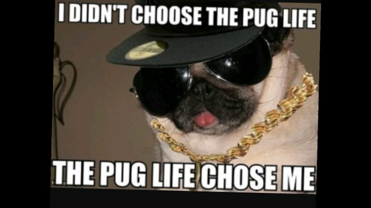maxresdefault cute dog memes youtube