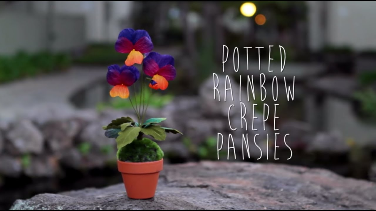 Crepe Paper Pansy Tutorial Youtube