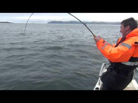 Fiske i Norge, Myfjord Sjöhus Hälleflundra 2013   Del 4/ 5