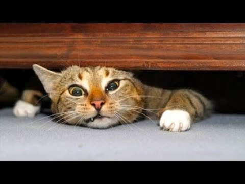 Try Not To Laugh Challenge - Funny Cat & Dog Vines compilation (2019)
