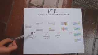 PDF EN DE CADENA REACCION POLIMERASA LA