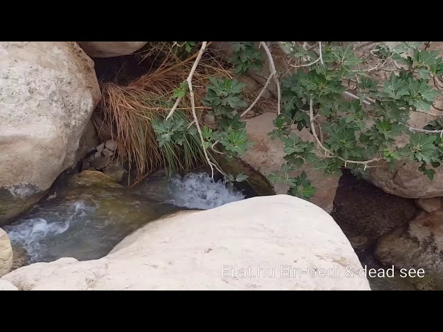 Holt-tenger & Ein-Gedi Eilat.hu