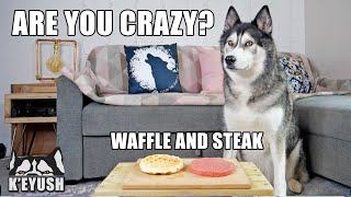 Left My Husky Alone With Steak And Waffles! He Can't Believe it!