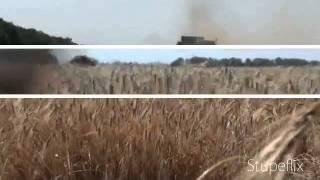 Ячмень 2011(, 2011-06-27T09:25:57.000Z)
