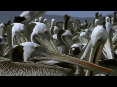 Riddle of The Atacama Desert -- National Geographic Documentary 2015