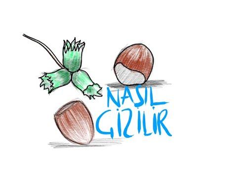 Findik Nasil Cizilir Kolay Findik Cizimi Youtube