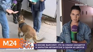Найденные в закрытом фургоне собаки пройдут ветеринарный осмотр - Москва 24