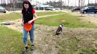 Frisbee Dog Training In The Park Celebrating Atlanta Spring Time