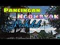 Pancingan Perkutut Ombyokan Perkutut Lokal  Mp3 - Mp4 Download