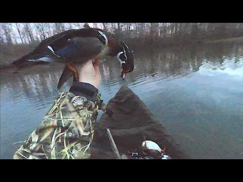 Duck Hunting 2020 - Woodies In Our Lap