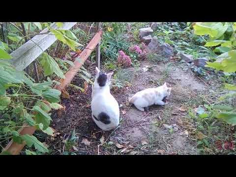 Вопрос: Как заставить кота охотиться?